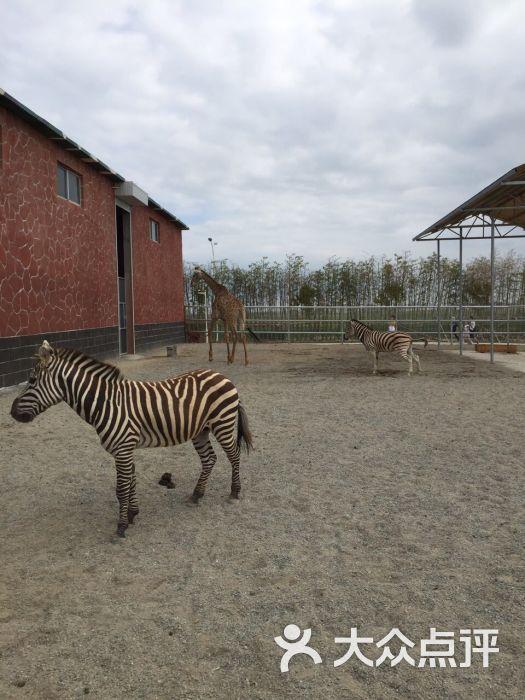 台州湾野生动物园图片 - 第5张