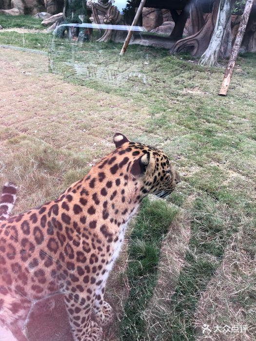 永鸿野生动物世界图片 - 第43张