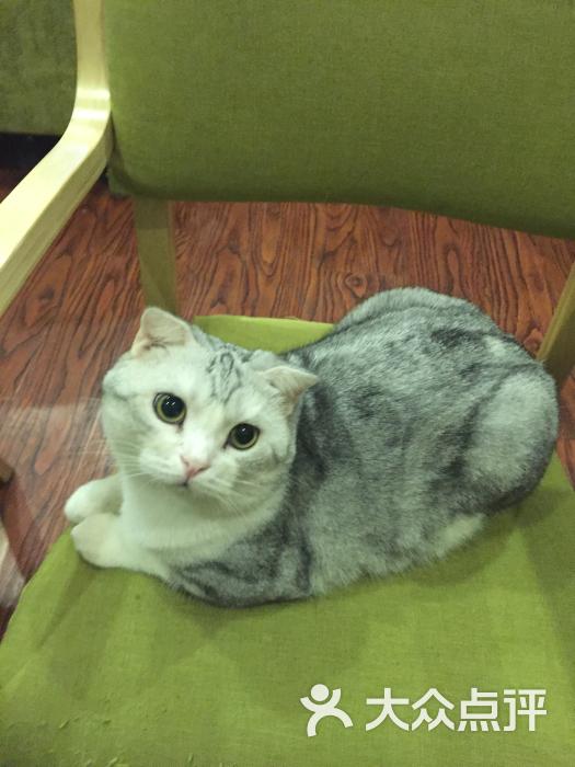 杯子猫咖啡厅-图片-北京美食-大众点评网