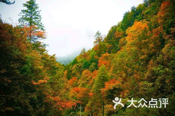 秦岭森林公园图片 - 第7张