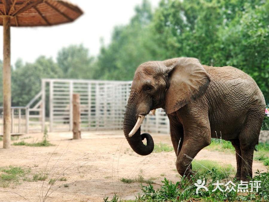 北京动物园图片-北京动物园-大众点评网