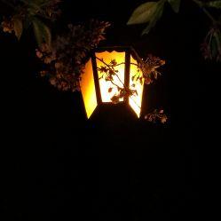 鸡鸣寺的图片