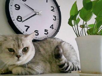 猫森林宠物寄养小店
