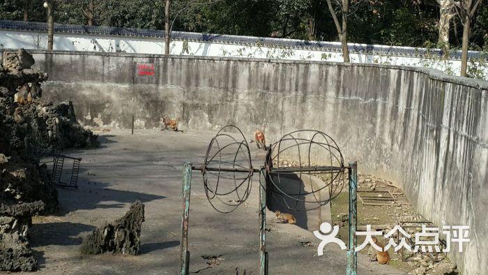 宜昌儿童公园动物园图片 - 第9张
