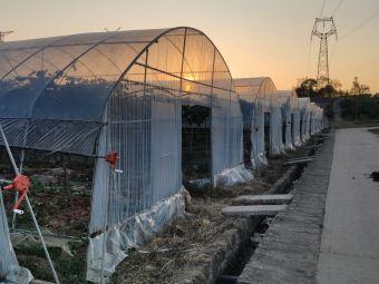 津地禾生态农业体验农场