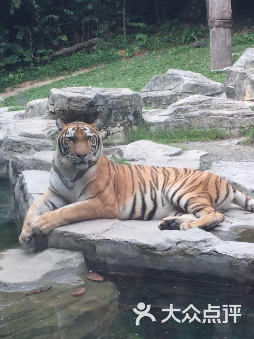 深圳野生动物园图片 - 第2张