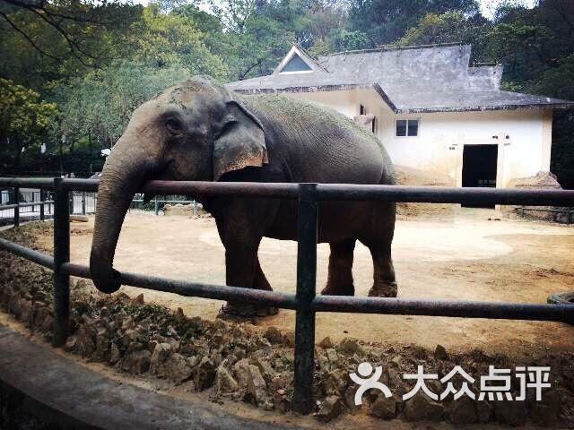 温州动物园景山动物园图片 - 第352张