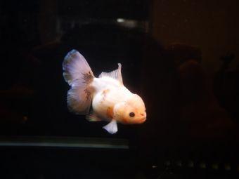 啵啵鱼MINI水族
