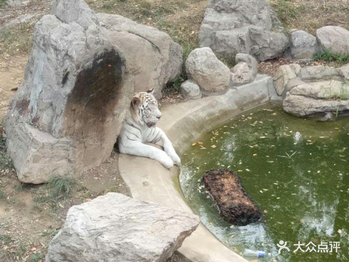 石家庄动物园图片 - 第11张