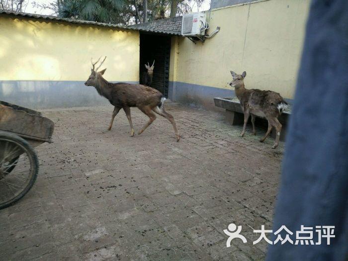 渭滨公园动物园图片 - 第21张