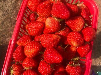 奶油草莓采摘园