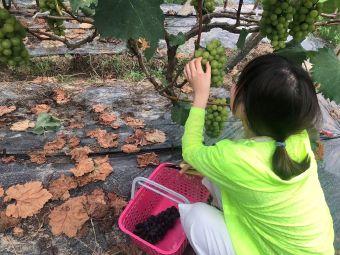 上海盛氏果业采摘园