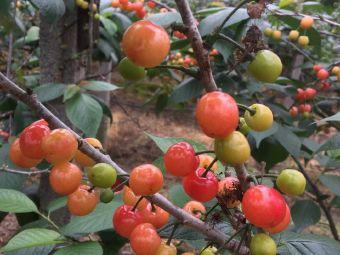 浙大格林水果采摘园