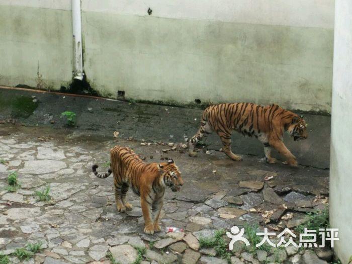 武汉动物园-图片-武汉周边游-大众点评网