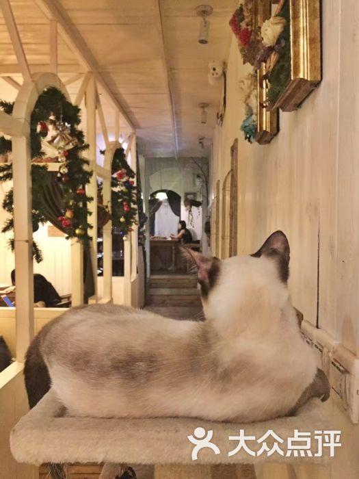 time of juliet 猫主题木屋餐吧图片 - 第8张