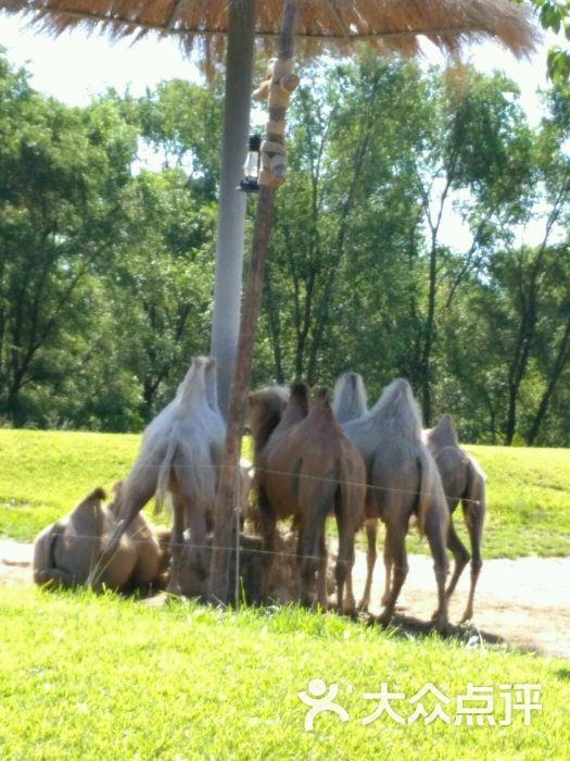 北京野生动物园骆驼图片 - 第6167张