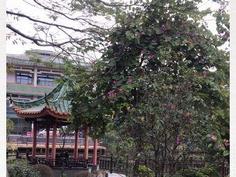 珠岛宾馆商务楼