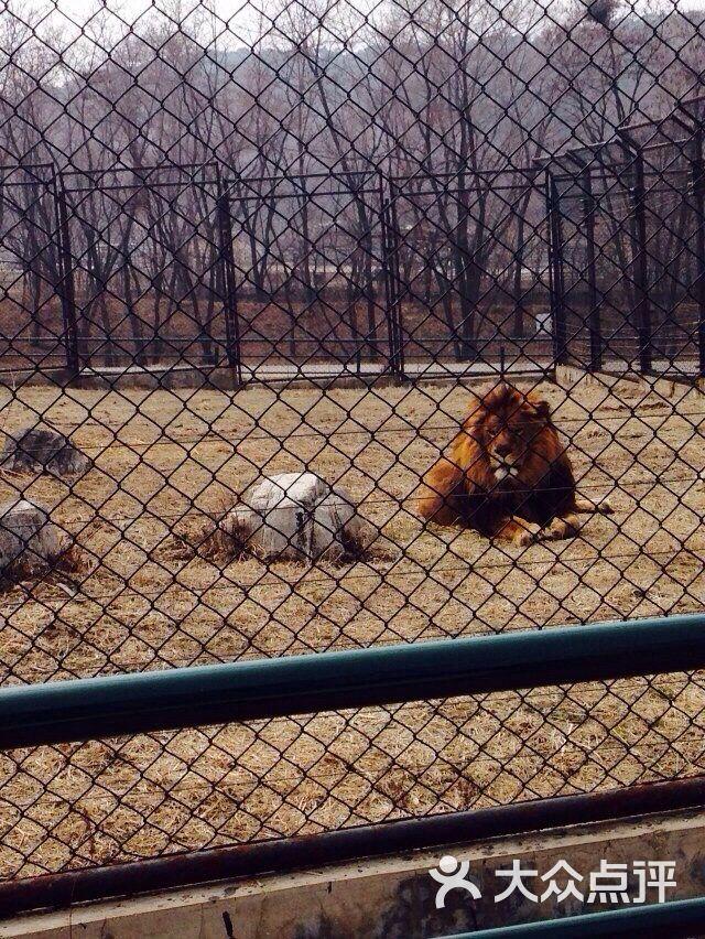 棋盘山动物园