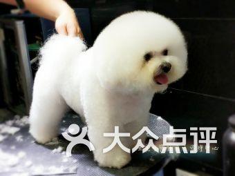 王先生的精品宠物店