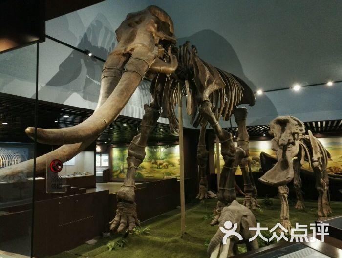 中国科学院古脊椎动物与古人类研究所图片 - 第3张
