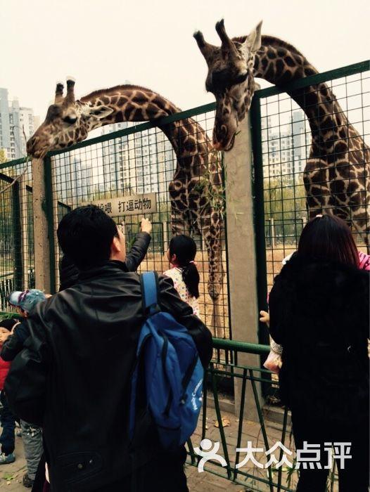 天津动物园_tgmailuser