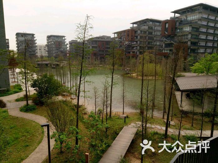 泰华梧桐岛--环境图片-深圳生活服务-大众点评网