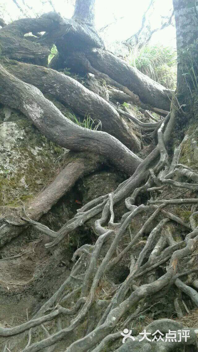 五指山热带雨林风景区图片 - 第1张