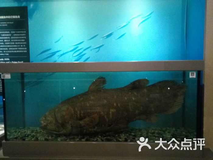 中国古动物馆图片 - 第4张