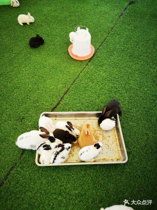 万达广场亲子动物乐园(槐房万达店)图片 - 第125张