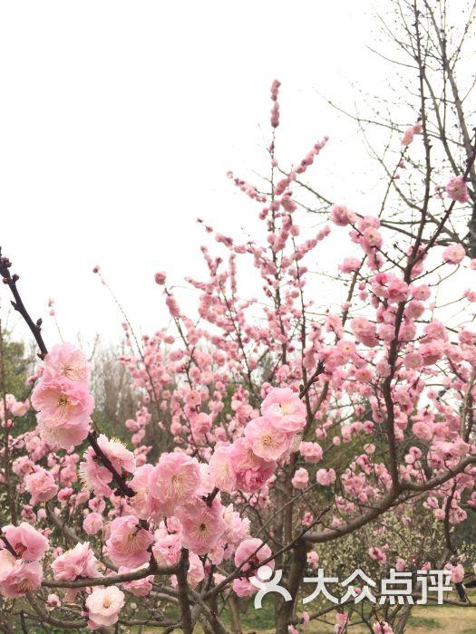 梅花山风景区图片 - 第5张