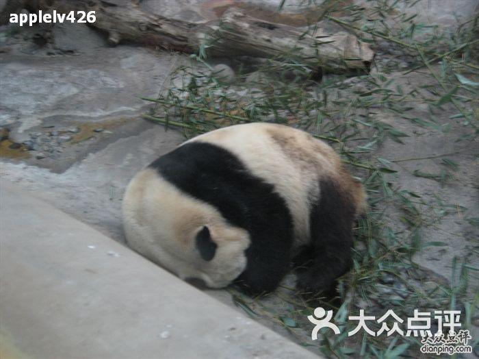 北京动物园-熊猫图片-北京景点-大众点评网