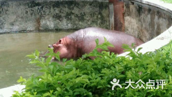 广州动物园怎么样,好不好的默认点评-广州-大众点评