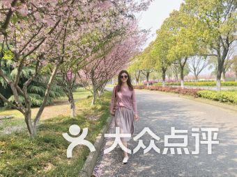 樱花岛垂钓中心