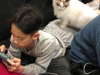 璟田布偶猫