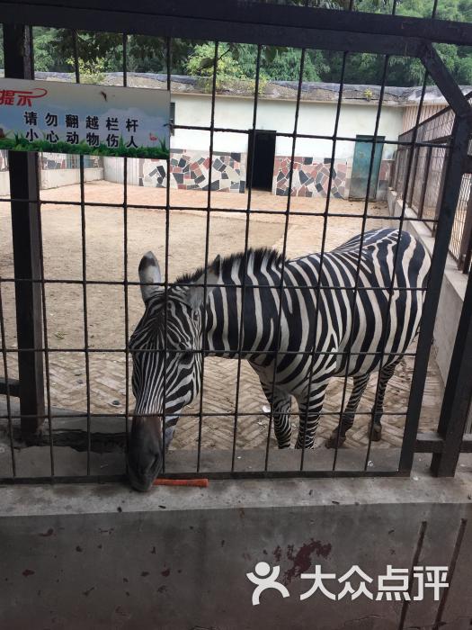 保定市动物园-图片-保定周边游-大众点评网