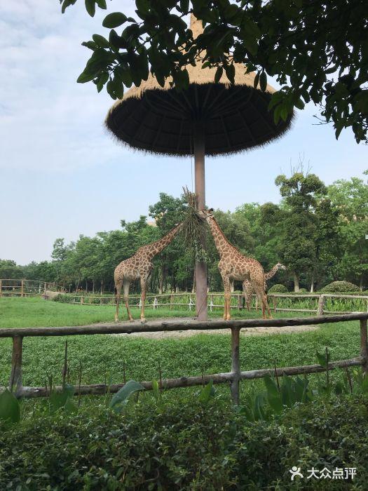 南昌新动物园图片 - 第45张