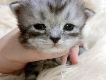 佳菲猫舍猫咪生活馆