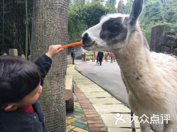 贵阳森林野生动物园图片 - 第2张