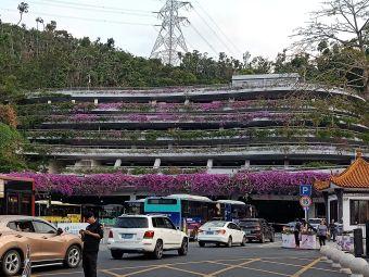 深圳仙湖植物园停车场
