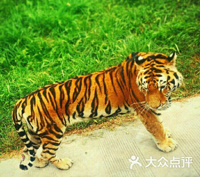 上海野生动物园图片 - 第19680张