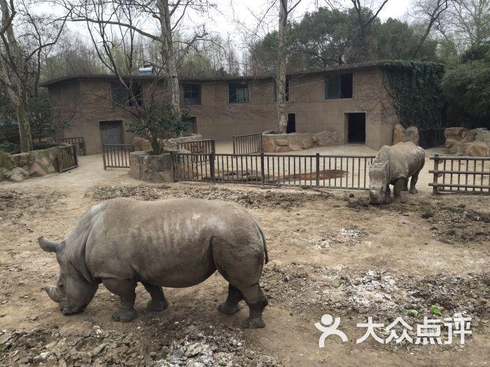 上海动物园-图片-上海景点-大众点评网