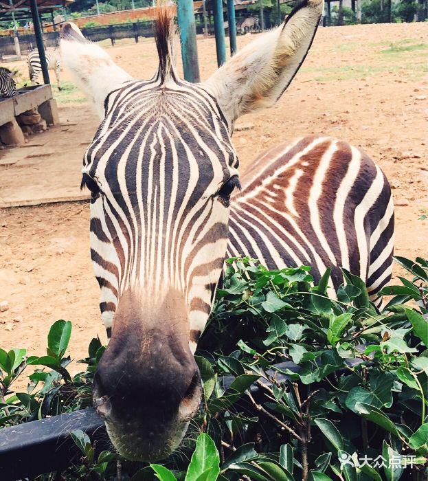 无锡动物园●太湖欢乐园