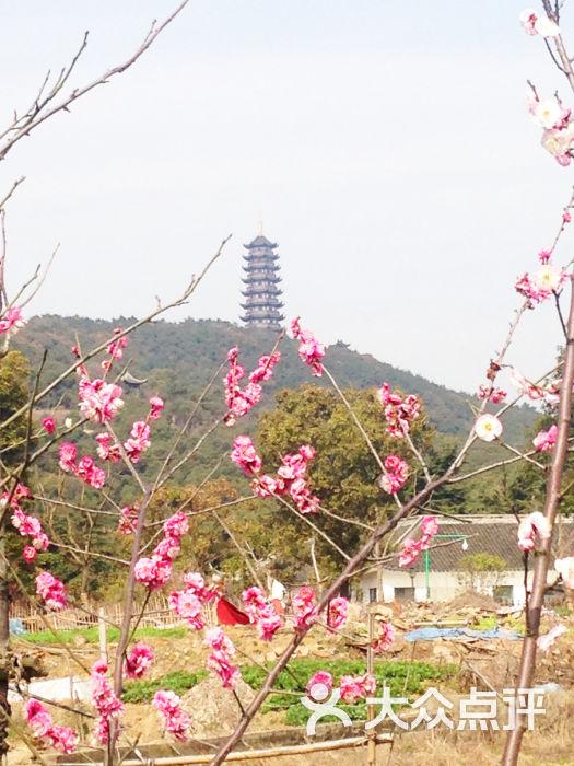 香山风景区-香山 &梅花图片-张家港景点-大众点评网