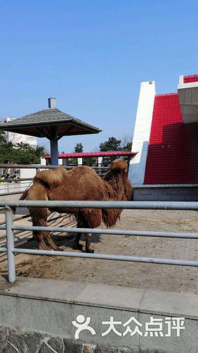 青岛动物园图片 - 第1张