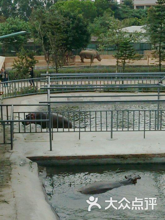 东莞寮步香市动物园图片 - 第39张