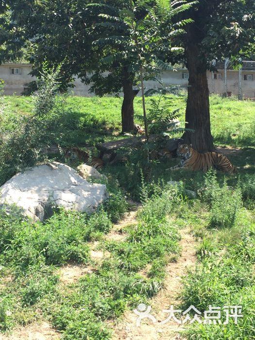 秦岭野生动物园-图片-西安周边游-大众点评网