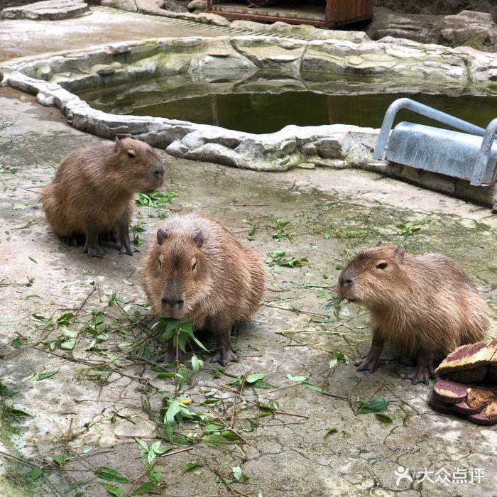 碧峰峡野生动物园图片 - 第166张