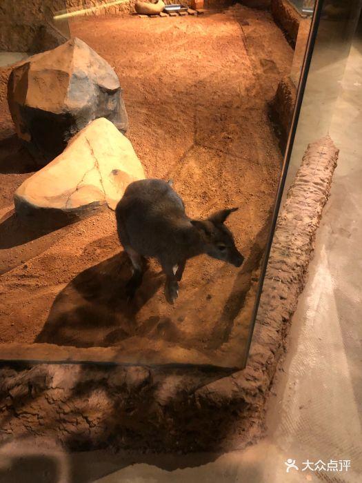 天津zoonly动物主题公园图片 - 第12张