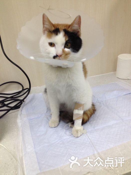 美联众合百环动物医院-图片-北京宠物-大众点评网