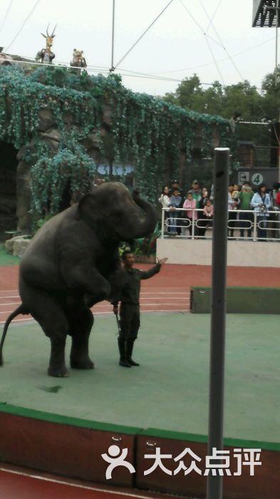 上海野生动物园图片 - 第22张